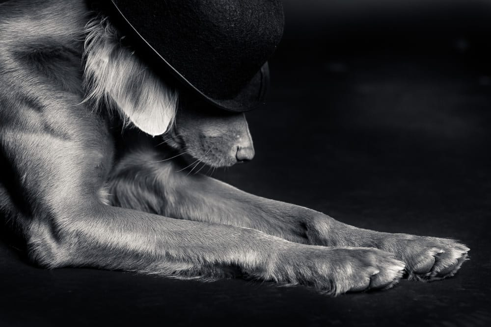 Hundefotograf Ravensburg